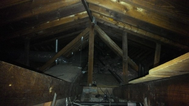 All safe and well in the attic... whew.